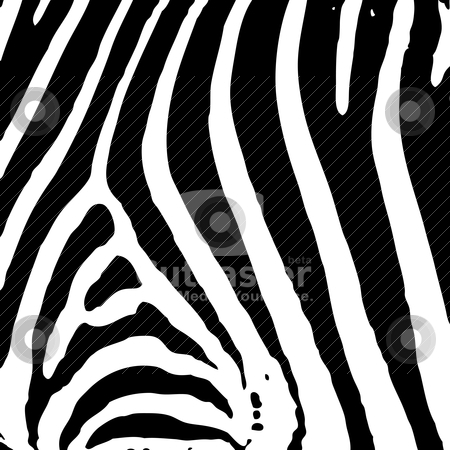 Zebra print stock vector clipart, Illustrated abstract Zebra black and white print background by Michael Travers