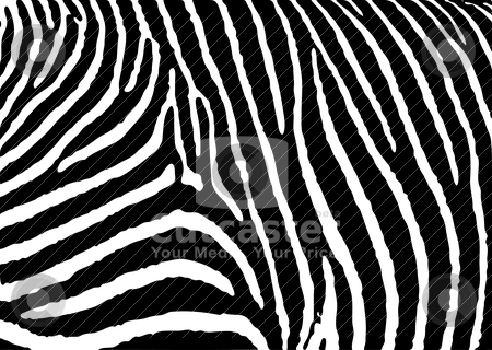 Zebra pattern large stock vector clipart, Black and white zebra pattern background with simple deisgn by Michael Travers