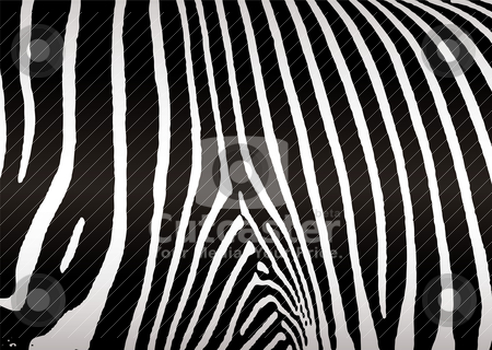 Zebra skin stock vector clipart, Black and white zebra skin or hide that makes ideal background by Michael Travers