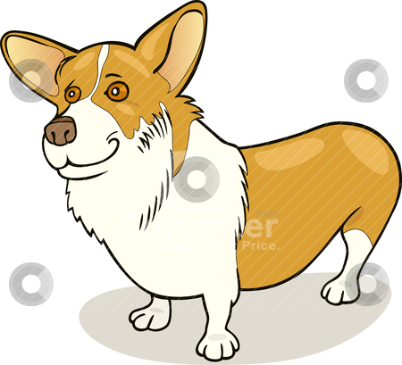 Pembroke Welsh Corgi stock vector clipart, Illustration of purebred Pembroke Welsh Corgi dog by Igor Zakowski
