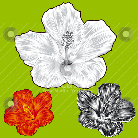 Violet Flower Picture on Flower Blossom Variations Stock Vector Clipart  Set Of Hibiscus Flower