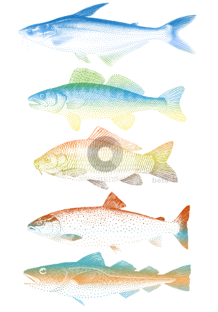 Set of colorful vector fishes stock vector clipart, set of colorful fishes, vector by Beata Kraus