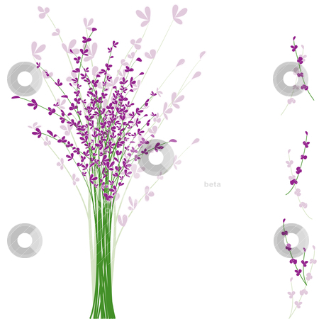 Summertime purple Lavender flower stock vector clipart, summertime purple Lavender flower on white background by meikis