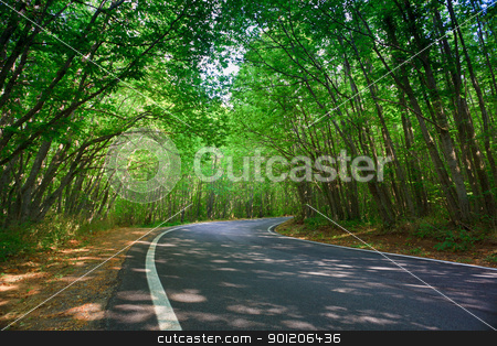 Green tunnel stock photo, Tranquil road towards Gambarie d'Aspromonte in Calabria. Trees create a green tunnel.  by Natalia Macheda