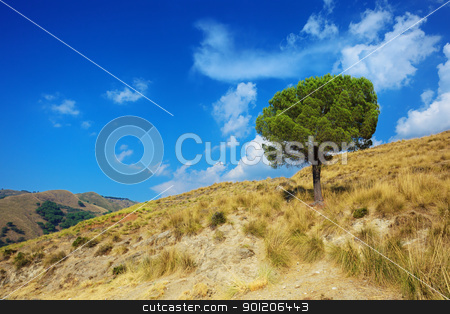 Lonely pine tree on torrid hills of Calabria stock photo, Idyllic landscape of a lonely pine tree on torrid hills of Calabria by Natalia Macheda