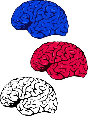 Human brain stock vector clipart, Illustration of human brain by Surya Zaidan