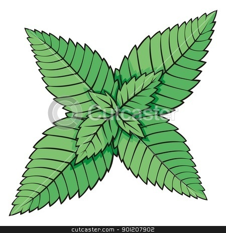 Mint leaves stock vector clipart, Green mint leaves illustration isolated on white background. by fractal.gr