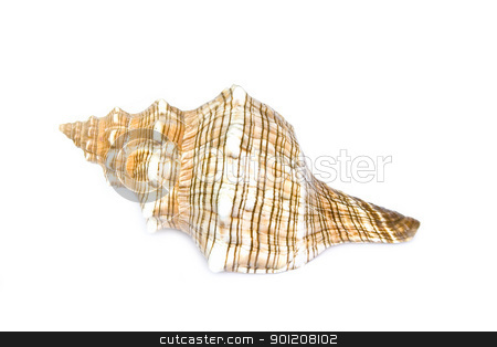 seashell stock photo, seashell isolated on white background by Minka Ruskova-Stefanova