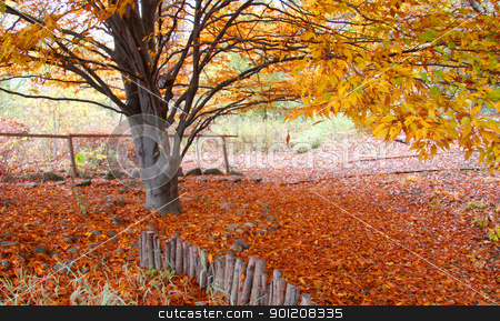 Autumn tree stock photo, Colorful autumn tree and fallen leaves underneath the tree by Sreedhar Yedlapati