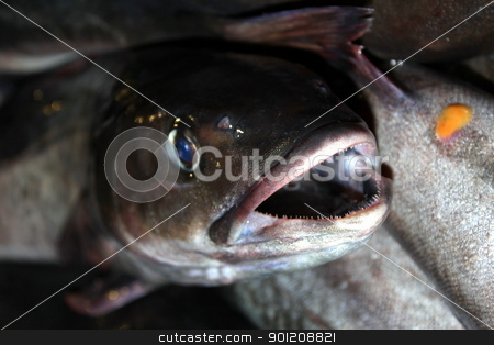 Fish Catch stock photo, Full box of fresh catched fish close up by Henrik Lehnerer