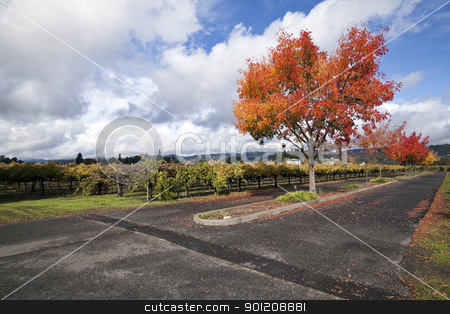 Vineyard Landscape stock photo, A vineyard and autumn colored trees around a road by Kevin Tietz
