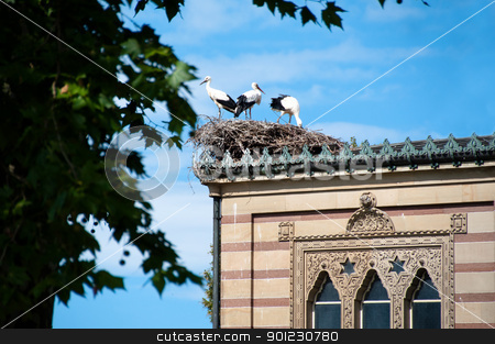 Stork Family stock photo, Family of three storks in the nest on arabic building by Frank G?