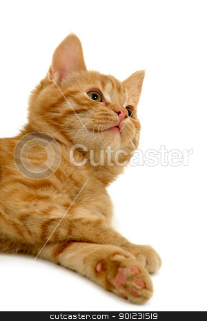 Kitten resting and looking stock photo, Kitten resting and looking up by Lars Christensen