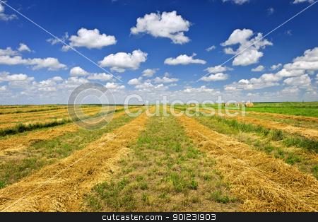 Wheat farm field at harvest stock photo, Harvested wheat on farm field in Saskatchewan, Canada by Elena Elisseeva