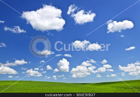 Green rolling hills under blue sky stock photo, Lush green lentil and wheat fields under blue sky in Saskatchewan prairies of Canada by Elena Elisseeva