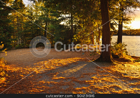 Autumn trees near lake stock photo, Fall trees and clearing at sunset near Lake of Two Rivers in Algonquin Park, Ontario, Canada by Elena Elisseeva