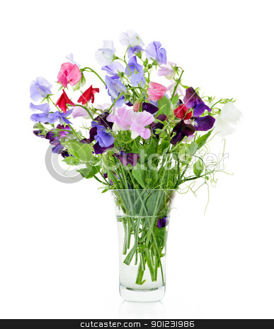 Bouquet of sweet pea flowers in vase stock photo, Bouquet of colorful sweet pea flowers in glass vase by Elena Elisseeva