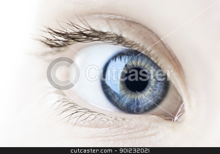 Eye closeup stock photo, Female blue eye looking at camera close up by Elena Elisseeva