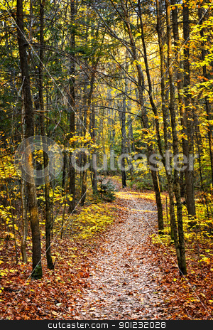 Path in fall forest stock photo, Fall forest path with fallen leaves covering the ground, Algonquin Park, Canada. by Elena Elisseeva