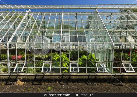 Greenhouse stock photo, Large glass greenhouse or hothouse building exterior with plants by Elena Elisseeva
