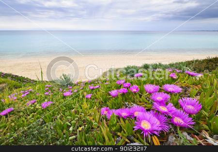 Aegean sea coast in Greece stock photo, Coast of Aegean sea with blooming ice plants in Chalkidiki, Greece by Elena Elisseeva
