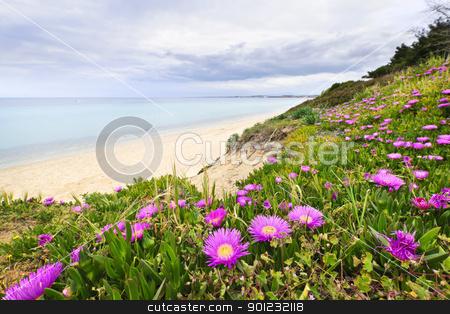 Mediterranean landscape stock photo, Coast of Aegean sea with blooming wildflowers in Chalkidiki, Greece by Elena Elisseeva