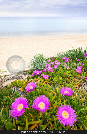 Aegean sea coast in Greece stock photo, Sea fig flowers blooming on Aegean coast in Chalkidiki, Greece by Elena Elisseeva