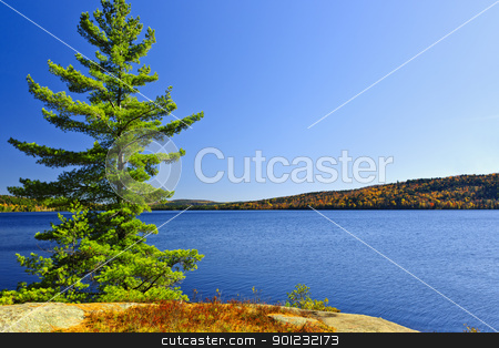Pine tree at lake shore stock photo, Tree and fall forest on rocky shore at Lake of Two Rivers, Algonquin Park, Ontario, Canada by Elena Elisseeva