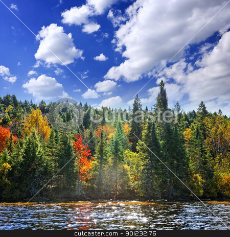 Fall forest in sunshine stock photo, Forest of colorful autumn trees on sparkling lake by Elena Elisseeva