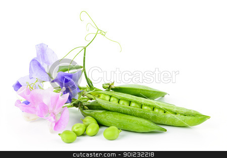 Pods of peas and sweet pea flowers stock photo, Peas in pods with sweet pea flowers isolated on white background by Elena Elisseeva