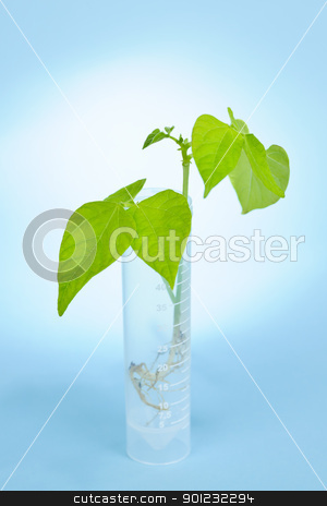 GM plant seedling in test tube stock photo, Genetically modified plant seedling in test tube on blue background by Elena Elisseeva