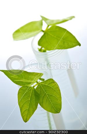 GM plant seedlings in test tubes stock photo, Genetically modified plant seedlings in two test tubes by Elena Elisseeva