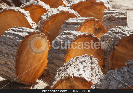 Abstract of Freshly Cut Pine Logs stock photo, Abstract of Freshly Cut Pine Logs in the Afternoon Sunshine. by Andy Dean