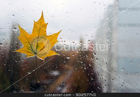 Autumn behind my window stock photo, Maple leaf has stuck behind a window by Imaster