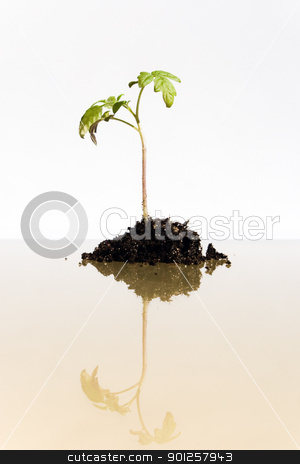 Young plant grows stock photo, Young plant grows from the earth (conception of a growth) by Imaster