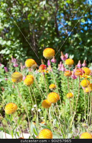 Beautiful flowers stock photo, Beautiful flowers of outdoors nature summer by Imaster
