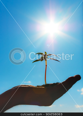 Growth metaphor  stock photo, Small plant on a hand men by Imaster