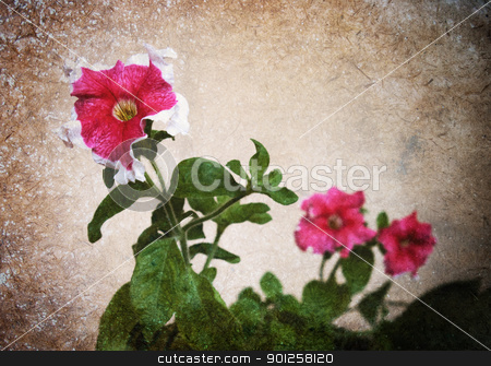 Old photo petunia flower stock photo, Old photo petunia flower by Imaster