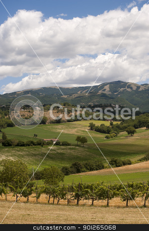 Landscape between Lazio and Umbria (Italy) at summer stock photo, Landscape between Lazio and Umbria at summer, with vineyards by clodio