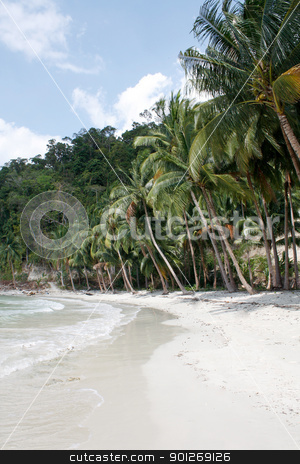 Lots of palms stock photo, Lots of palms by Lasse Kristensen@gmail.com