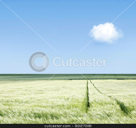 Field stock photo, A green field with wheel tracks by Lasse Kristensen@gmail.com