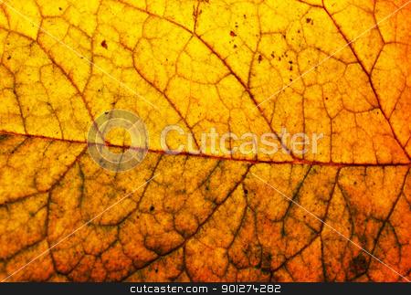 Autumn leaves stock photo, Polish golden autumn by johnnychaos
