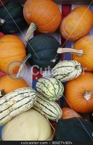 Fall Gourds stock photo, Fall Gourds by Ed Corey