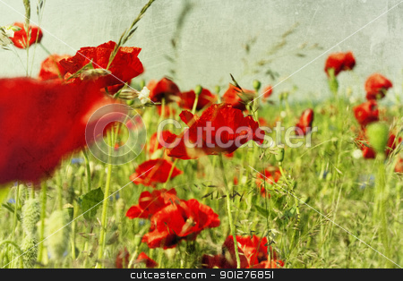 Field with flower of the poppy  stock photo, grungy illustration, field with flower of the poppy on background blue sky   by klenova