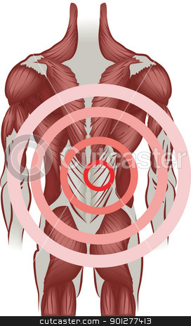 illustration of the human back muscles stock vector clipart, An illustration of the muscles of the human back  by Christos Georghiou