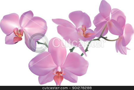 orchid Illustration stock vector clipart, Photorealistic illustration of a beautiful moth orchid. Created with meshes.  by Christos Georghiou
