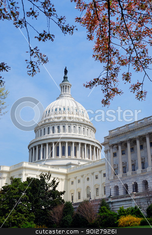 Washington DC. stock photo, American Capitol Hill Building with tree, lawn and blue sky, Washington DC, USA by rabbit75_cut