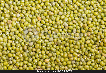 newly harvested soybeans stock photo, lot of soy in the market showing the texture  by luiscar