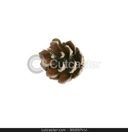 Pine Cone Isolated stock photo, pine cole isolated on white by Tyler Olson