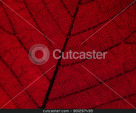 Red Leaf Texture stock photo, A macro detail image of a red leaf texture by Tyler Olson